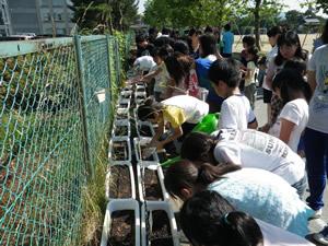 種をまいて、みんなで水やり。この後、小学生は夏休み中も当番を決め、毎日水やりをした(2012年6月28日)