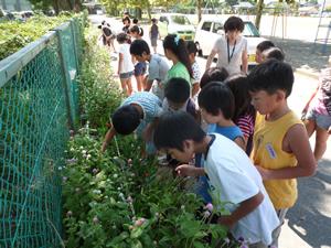 「やった~、咲いたぞ!」。花が咲いて大喜びの小学生たち(2012年9月7日)