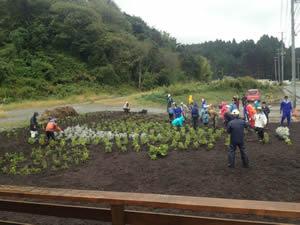 山形明正高校の生徒たちも参加し、花畑製作の作業(2012年9月30日・陸前高田市)
